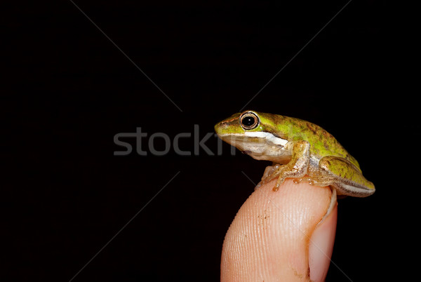 tiny frog Stock photo © clearviewstock