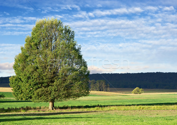 landscape tree Stock photo © clearviewstock