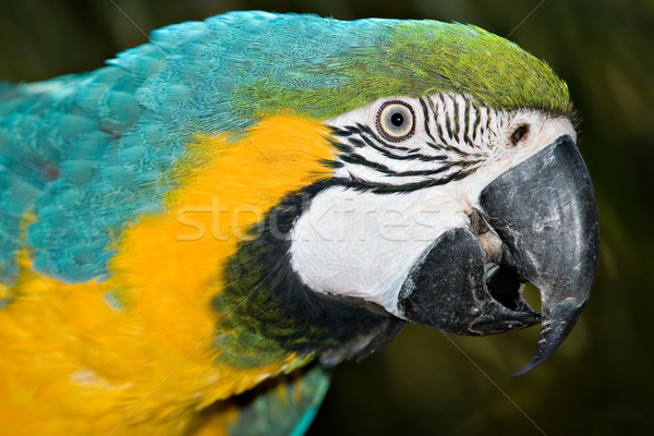 macaw Stock photo © clearviewstock