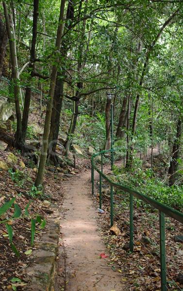forest path in darwin Stock photo © clearviewstock