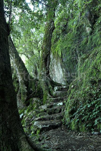 Percorso foresta pluviale passi mondo patrimonio pioggia Foto d'archivio © clearviewstock