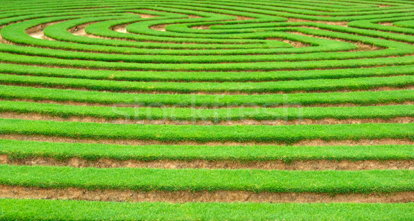 garden maze Stock photo © clearviewstock