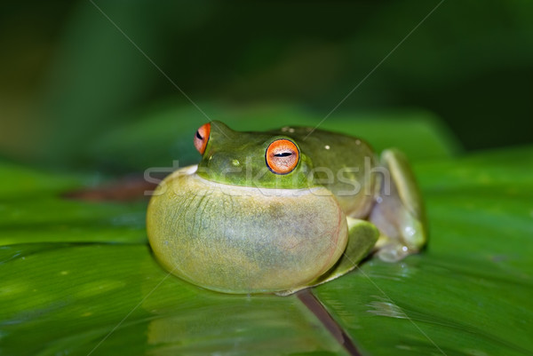 Stock photo: croaking