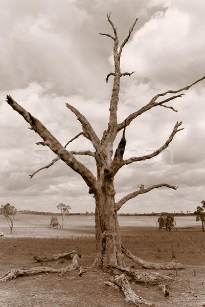 Verwüstung Sepia Bild alten toter Baum Sitzung Stock foto © clearviewstock