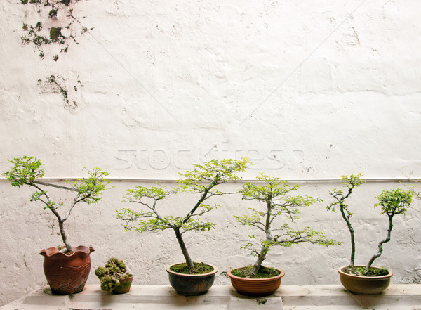 Bonsai fák kicsi fal kert zöld Stock fotó © clearviewstock