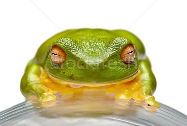 Stock photo: green tree frog