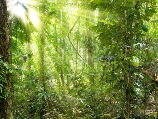 Sol selva tropical imagen luz Foto stock © clearviewstock