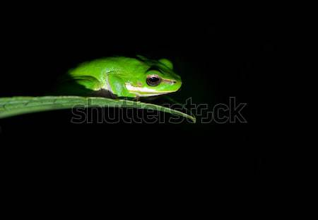 little frog Stock photo © clearviewstock
