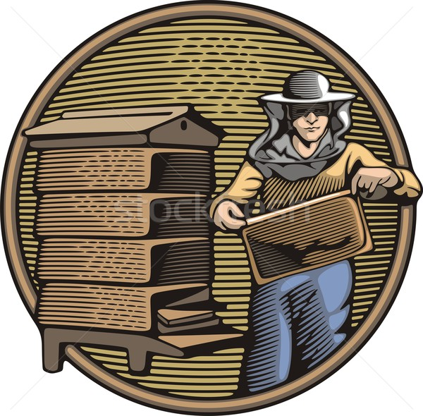 Vector illustration of a beekeeper, collecting honey from a beehive. Organic farming.  Woodcut style Stock photo © clipart_design