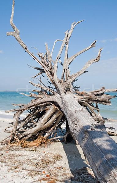 Plaży ocean lata drewna Zdjęcia stock © cmcderm1