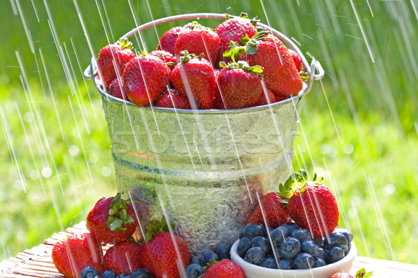 świeże truskawek deszcz wiadro jagody rano Zdjęcia stock © cmcderm1