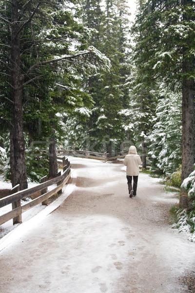 Neige hiver paysage couvert paysages temps Photo stock © cmcderm1
