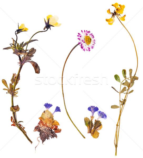 Conjunto alpino flores primavera verão Foto stock © Coffeechocolates