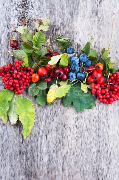 Autumn berries Stock photo © Coffeechocolates