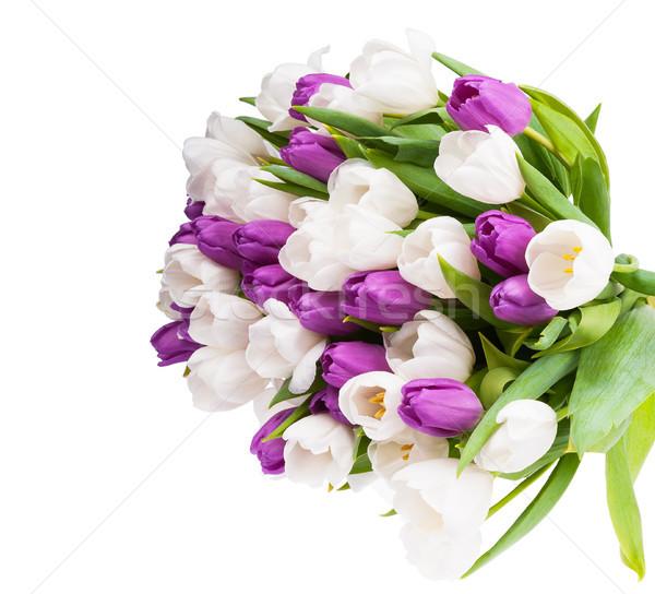 Buquê tulipas isolado branco beleza verão Foto stock © Coffeechocolates