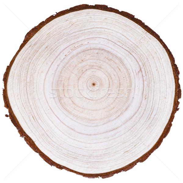 Cortar árvore pinheiro abstrato rachado isolado Foto stock © Coffeechocolates