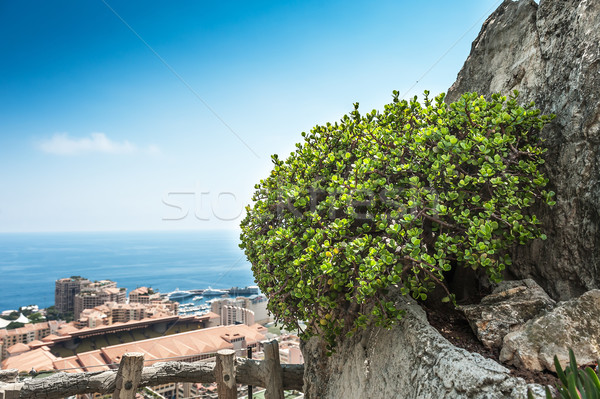 View of Monte Carlo and the Mediterranean Sea Stock photo © Coffeechocolates