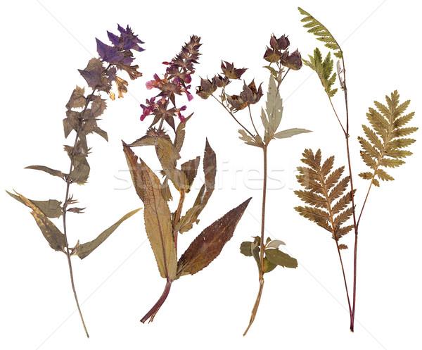 Set of wild flowers pressed Stock photo © Coffeechocolates