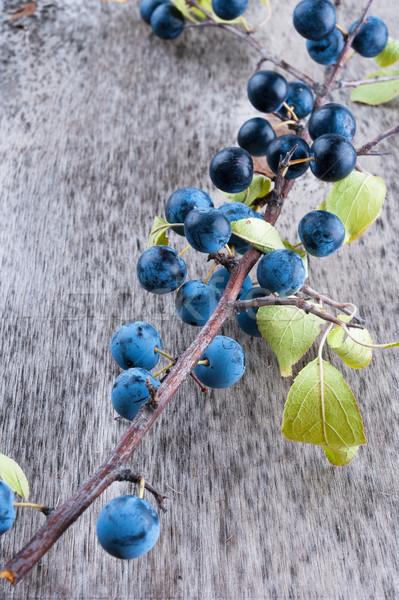 Sloe berry Stock photo © Coffeechocolates