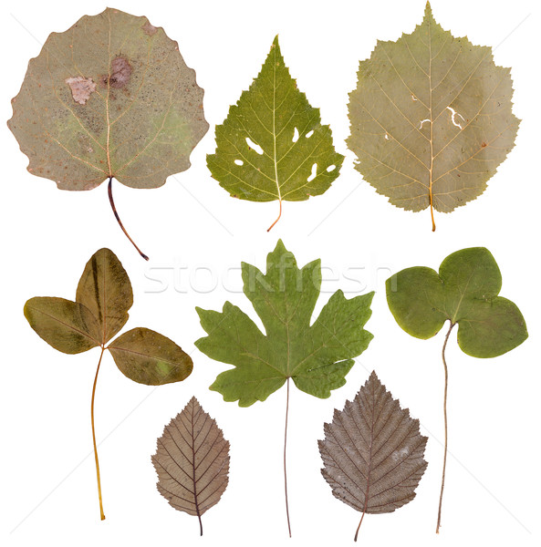 Leaves of various flowers  and trees Stock photo © Coffeechocolates