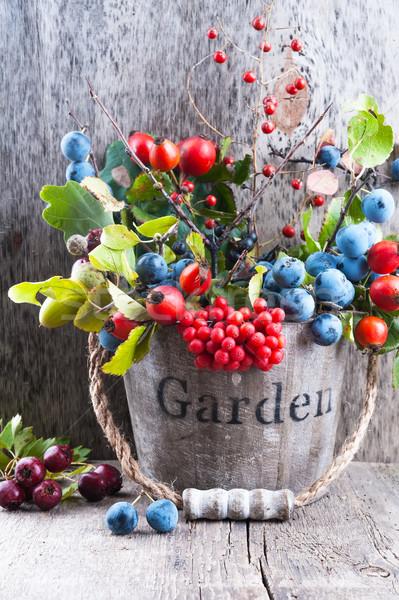 Autumn garden berries on the old wooden background Stock photo © Coffeechocolates