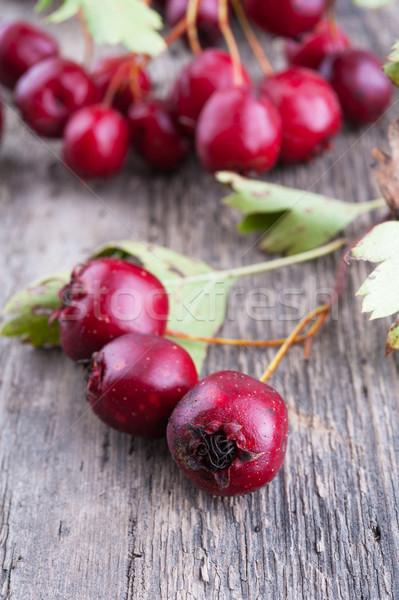 Hawthorn berries  Stock photo © Coffeechocolates