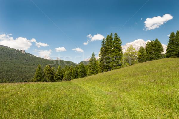 Alpino prado ensolarado verde blue sky árvore Foto stock © Coffeechocolates