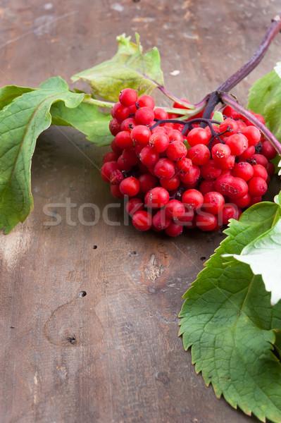 Red Elderberry Stock photo © Coffeechocolates
