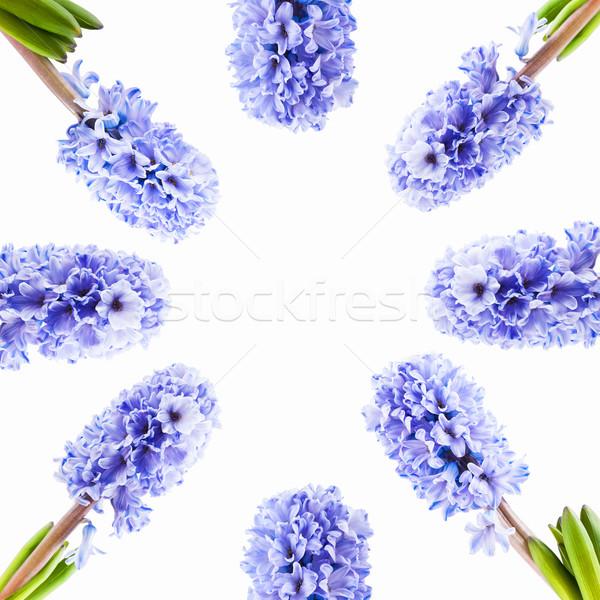 Conjunto azul jacinto branco quadro isolado Foto stock © Coffeechocolates