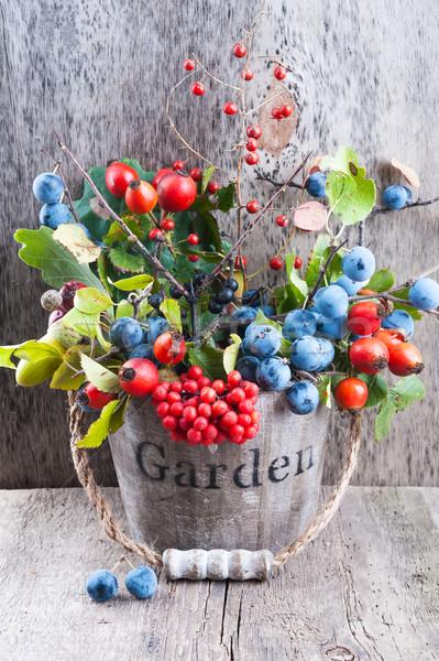 Outono jardim velho balde Foto stock © Coffeechocolates