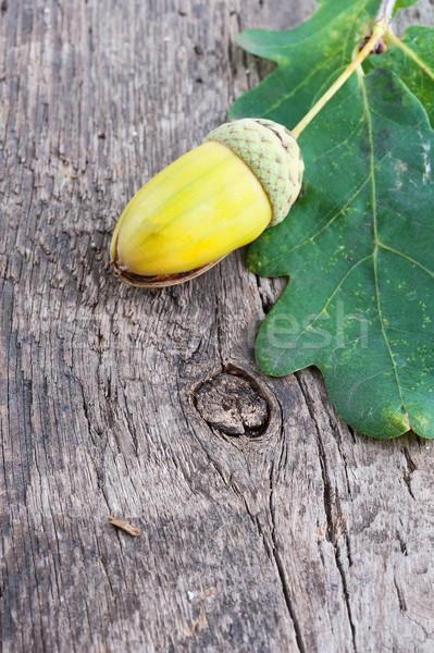 Eikel eiken blad oude houten Stockfoto © Coffeechocolates