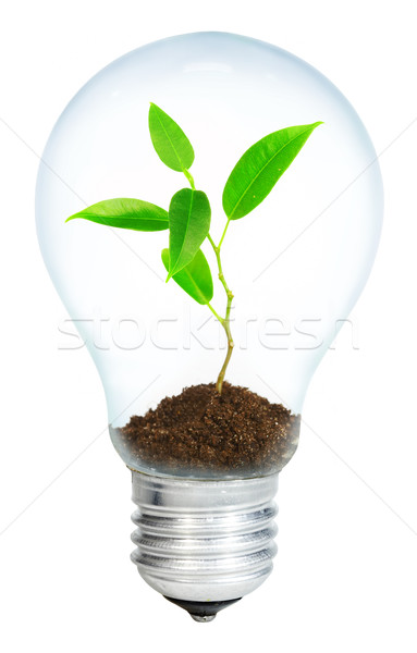 Young sprout in light bulb Stock photo © cookelma