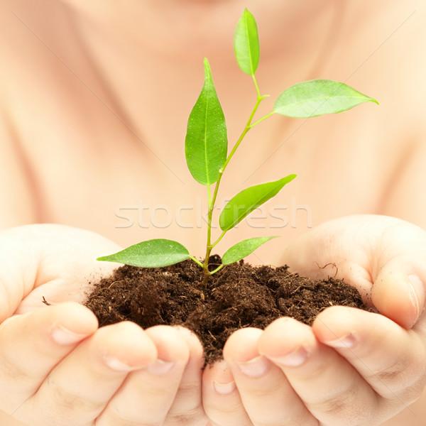 молодые завода рук человек дерево лист Сток-фото © cookelma