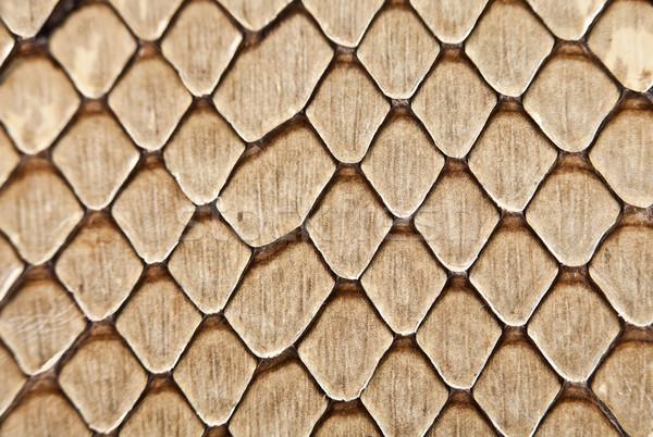 Snake leather texture Stock photo © cookelma