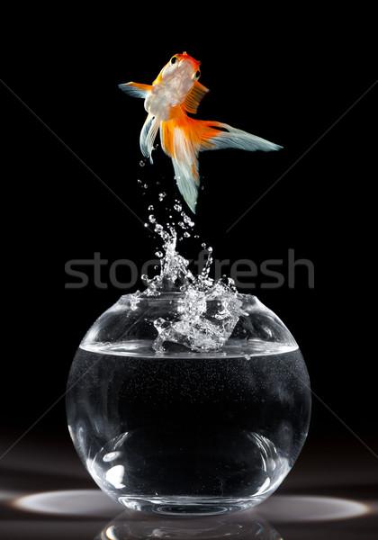 Goldfish Aller aquarium sombre poissons vague Photo stock © cookelma