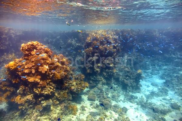 Korallzátony Vörös-tenger hal természet tenger kék Stock fotó © cookelma