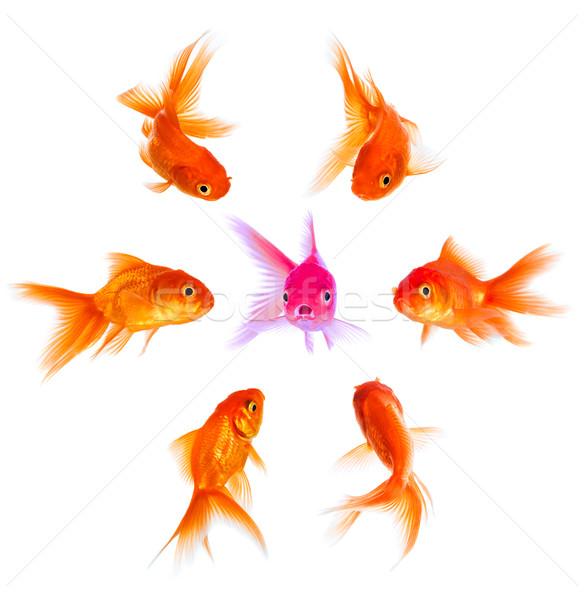 Сток-фото: Goldfish · неодобрение · толпа · группа · команда · золото