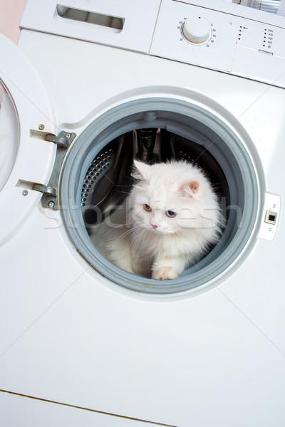 washing machine and cat Stock photo © cookelma