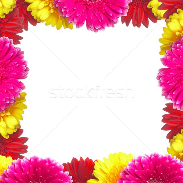 Сток-фото: цветами · оранжевый · Дать · красный · Daisy