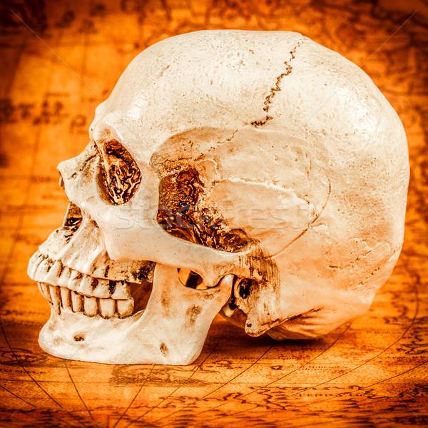 Human skull Stock photo © cookelma