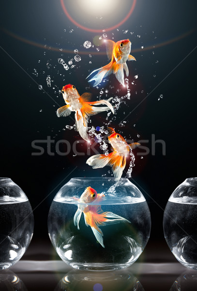 Aquarium sombre poissons lumière Aller animaux Photo stock © cookelma