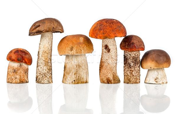 Orange-cap Boletus and porcini mushroom Stock photo © cookelma