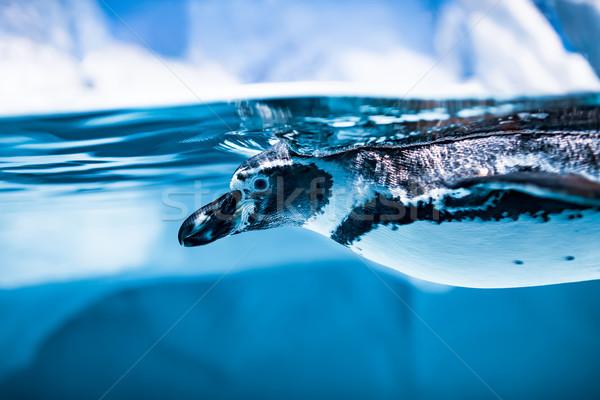 пингвин плаванию воды текстуры аннотация морем Сток-фото © cookelma