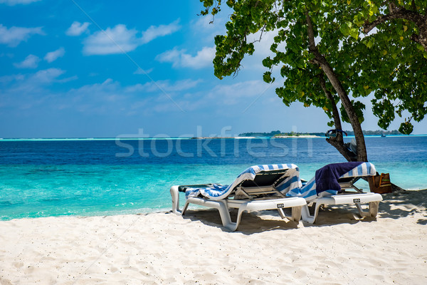 Maldivler plaj tropikal su manzara yeşil Stok fotoğraf © cookelma