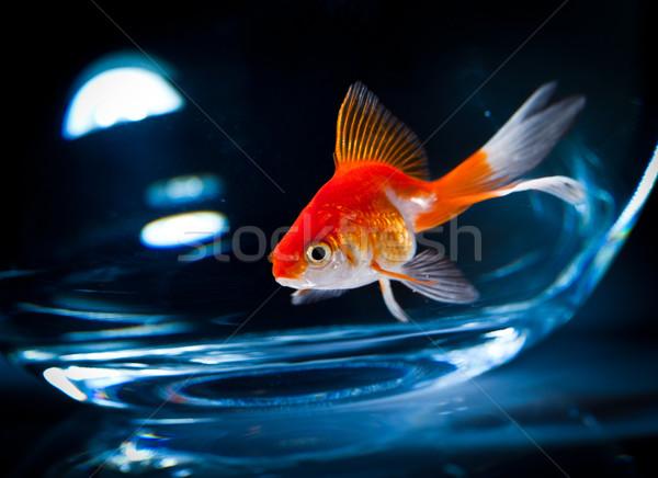 Akvaryum balığı akvaryum karanlık sıvı tank Evcil Stok fotoğraf © cookelma
