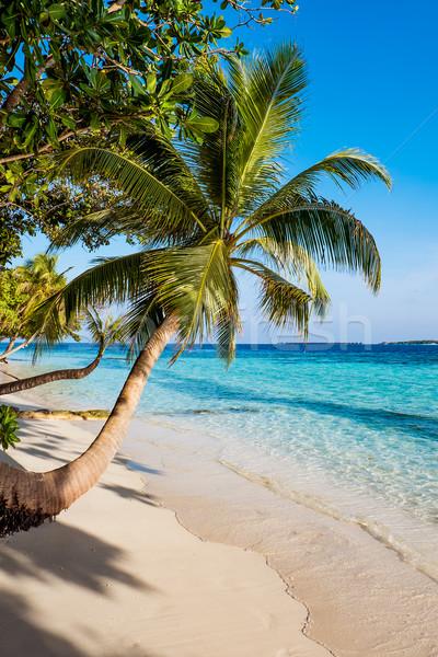Maldivler plaj su güneş Stok fotoğraf © cookelma