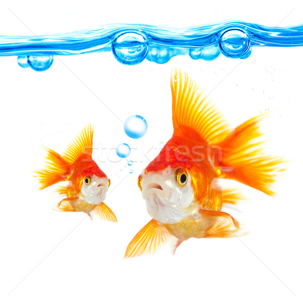 Photo stock: Goldfish · bulles · blanche · eau · orange · animaux