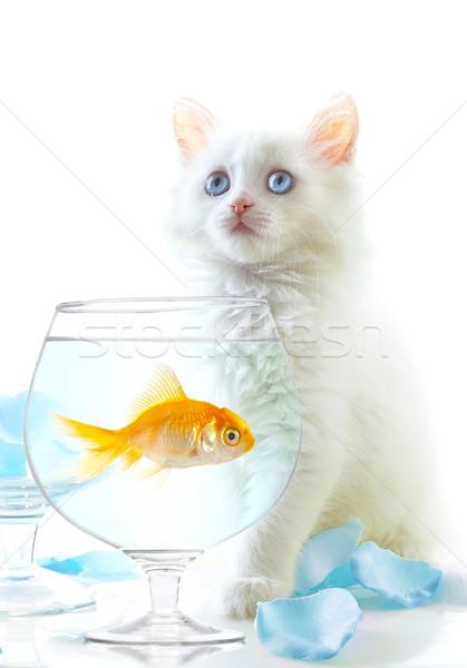 Gatinho peixe branco ouro pequeno olho Foto stock © cookelma