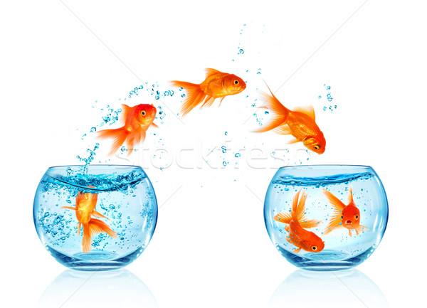 Akvaryum balığı atlama dışarı akvaryum yalıtılmış beyaz Stok fotoğraf © cookelma