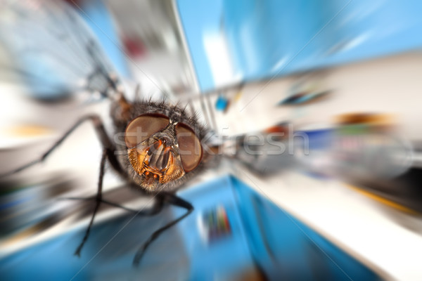 housefly  Flying in kitchen Stock photo © cookelma